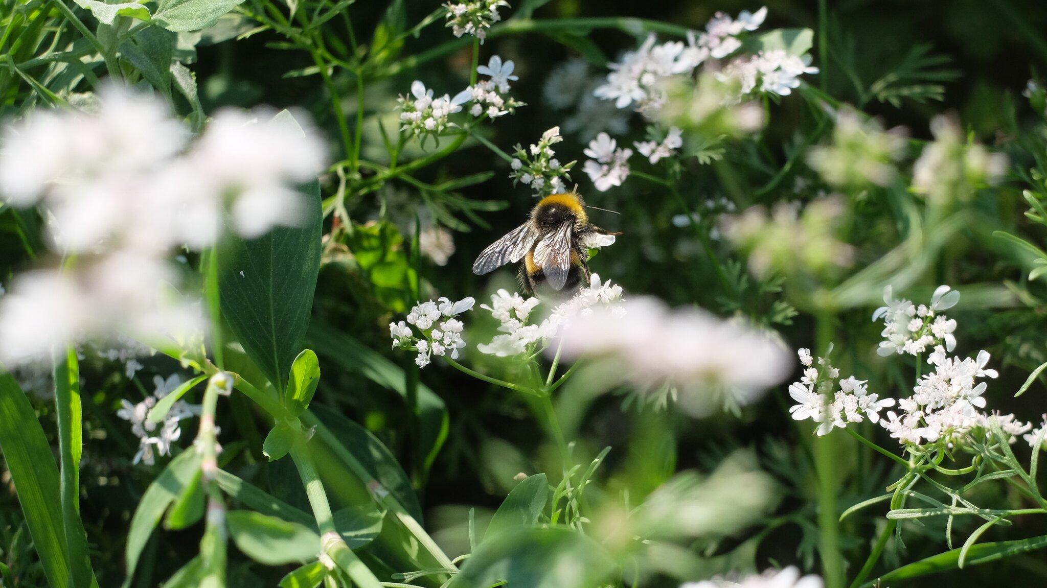 Unterschriftenaktion-zum-Pestizidverbot-erfolgreich-beendet