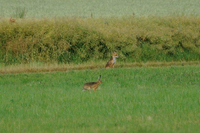 Wo Sich Fuchs Und Hase Guten Morgen Sagen