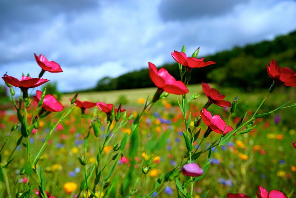Ganz und zu Extrem Sommerblumen im August &DV_64
